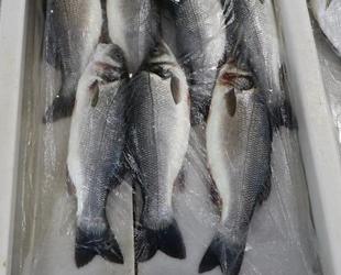 Deniz salyası nedeniyle balık fiyatları düşmüyor
