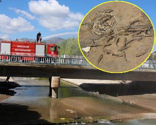 Oltu Çayı'na balıklar için 12 ton su boşaltıldı