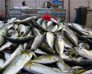 Balıkçı tezgahlarında fiyatlar el yakıyor