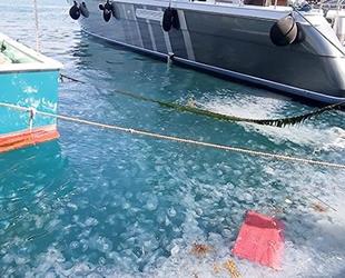 İstanbul Boğazı, denizanası istilasına uğradı