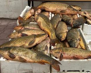 Kızılırmak'tan kaçak balık tutan şüpheli yakalandı
