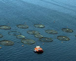 Muğla'dan 410 milyon dolarlık balık ihracatı gerçekleştirildi