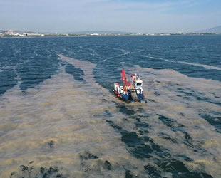 İzmit Körfezi'nden 2 ayda 150 ton deniz salyası toplandı