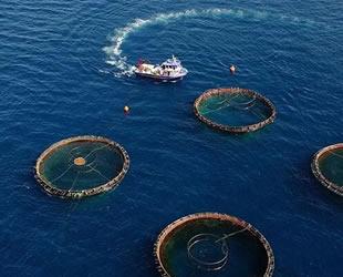 Türkiye'nin su ürünleri üretimi yüzde 6 azaldı