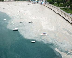 Deniz salyası sorununun çözümü için KBM kuruldu