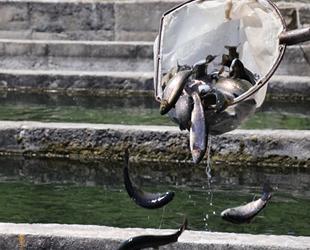 Denizli'de üretilen balıklar 15 ülkeye ihraç ediliyor
