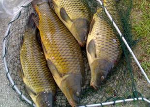 Göl ve akarsularda av yasağı başlıyor