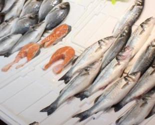 Marmara Denizi'ndeki müsilaj, balıkçıları olumsuz etkiledi
