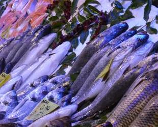 Marmara'daki müsilaj, Anadolu'daki balıkçıları da etkiledi