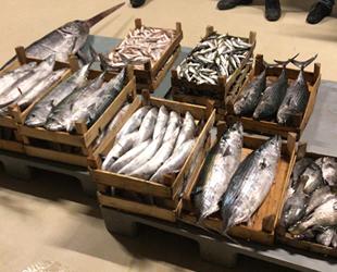 Yasak dönemde avlanılan 1.5 ton balığa el konuldu