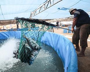 İsrail saldırıları, Gazze'deki balık çiftliklerini de etkiledi
