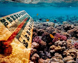 Akdeniz'deki deniz suyu yüzde 20 daha hızlı ısınıyor