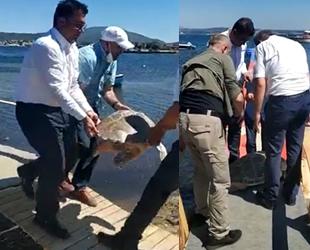 Urla'da sahile vuran yaralı caretta tedavi altına alındı