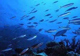 Asitlenen okyanus canlıları öldürüyor