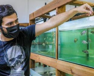 Antalya'da denek balıkları öğrenciler büyütüyor