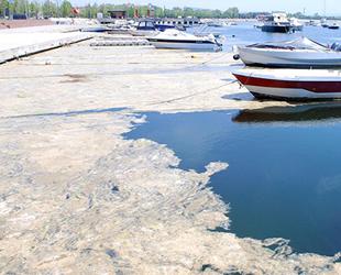 Murat Kurum'dan müsilaja karşı 'denize balık ilave etmeli' önerisi geldi