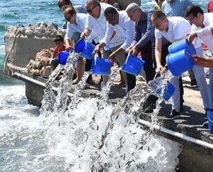 Güllük Körfezi'ne 30 bin levrek balığı yavrusu bırakıldı