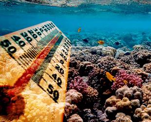 Okyanuslarda metan yiyen bakteriler, sıcaklığın önüne geçiyor