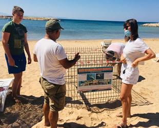 Deniz kaplumbağaları, Didim plajlarına yeniden yumurta bıraktı