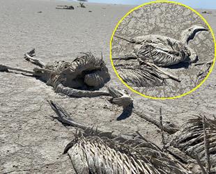 Tuz Gölü'nde binlerce flamingo yavrusu öldü