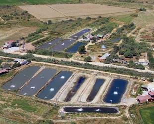 Toprak havuzda üretilen balıklar, yurt dışına ihraç ediliyor