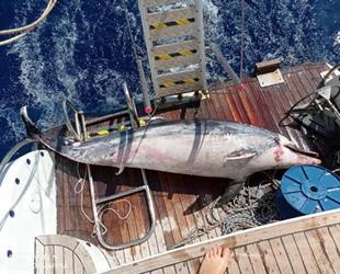 Datça'da tatilciler fark etti, ölü yunus tekneye alındı