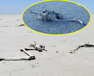 Tuz Gölü'ndeki flamingo ölümlerinin ardından yeni uyarı geldi