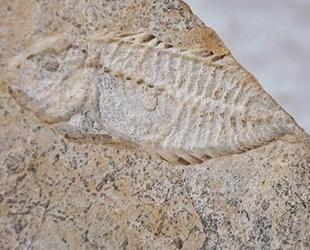 Meksika'da 95 milyon yıllık balık fosili keşfedildi