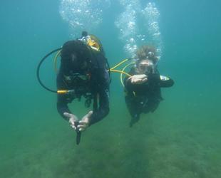 Deniz salyası istilası, dalgıçları Karadeniz'e yönlendirdi