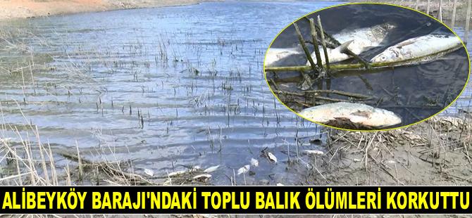 Alibeyköy Barajı'ndaki toplu balık ölümleri korkuttu
