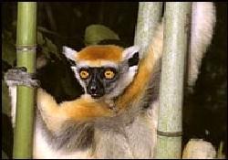 Dünyada 800 canlı türü tehlikede