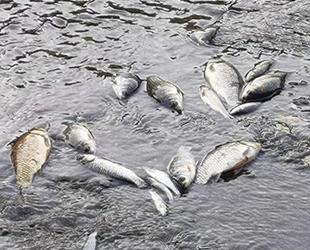Bursa'daki balık ölümleri tedirginlik yarattı