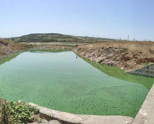 Sazlıbosna Gölü'nün rengi yeşile döndü