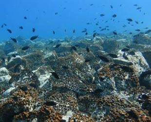 Deniz ekosistemleri, iklim kaynaklı kayıplara daha iyi uyum sağlıyor