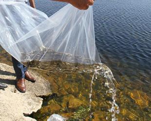Konya'da 21 göl ve gölete 1 milyon 8 bin yavru sazan bırakıldı