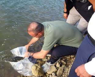 Çanakkale'de göletlere 250 bin adet pullu sazan balığı yavrusu bırakıldı
