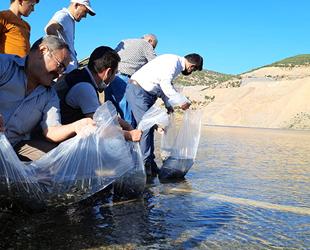 Konya'daki 21 göl ve gölete 1 milyon yavru sazan balığı bırakıldı
