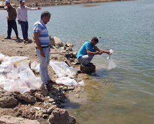 Sarımehmet Barajı'na 260 bin adet yavru balık bırakıldı