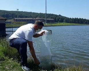Düzce'de göllere 70 bin adet yavru sazan balığı bırakıldı