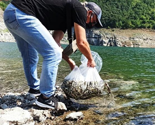 Samsun'da su kaynaklarına 1.6 milyon adet sazan bırakıldı