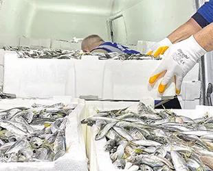 Gürpınar Su Ürünleri Hali'nde 8 ton balığa el konuldu