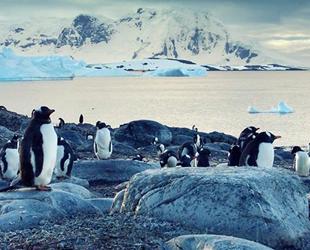 Türkiye, Antarktika'da yeni türler araştıracak