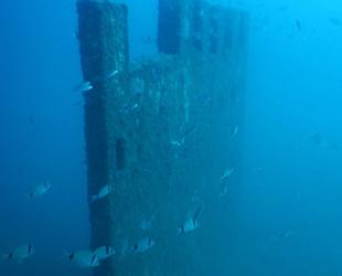 Saros Körfezi'ndeki Enez Tarihi Müzesi, balıklara yuva oldu