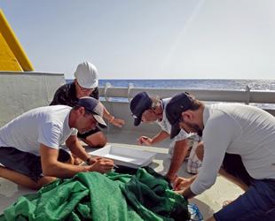 Finike Denizaltı Dağları'ndaki deniz memelileri izlenmeye başlandı