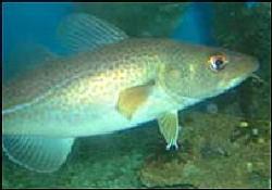 Avrupa Birliği balık avında anlaştı