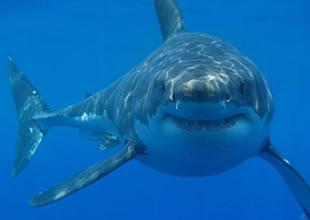 Köpekbalıklarını aklayacak sergi yarın