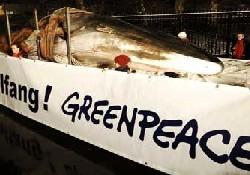 Japon Elçiliğine balina ölüsü