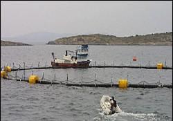 Kültür balıkçılığına yabancı istilası