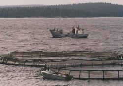 Türkiye'de 245 balık çiftliği var