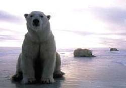 Küresel ısınma tehlikeli boyutta